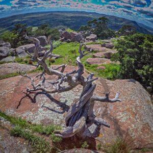 Oklahoma nature