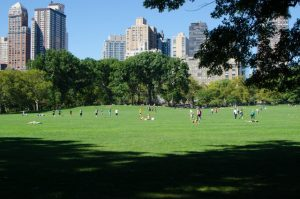 central park during the day